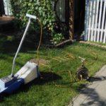 リュウノヒゲと電動芝刈機は芝生管理の必須アイテムです