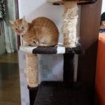 【超簡単】猫のお遊びポールの麻柱をDIYで簡単に修繕と更新しちゃいました